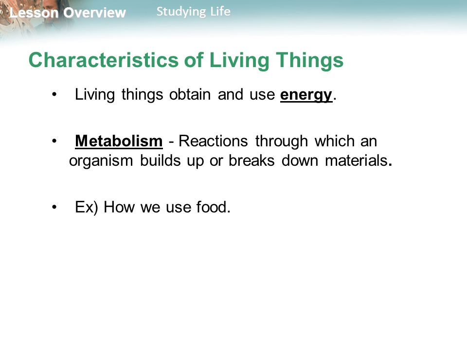 Lesson Overview Lesson Overview Studying Life Characteristics of Living Things Living things obtain and use energy.