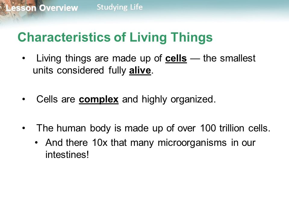 Lesson Overview Lesson Overview Studying Life Characteristics of Living Things Living things are made up of cells — the smallest units considered fully alive.