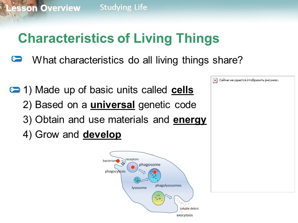 Lesson Overview Lesson Overview Studying Life Characteristics of Living Things What characteristics do all living things share.