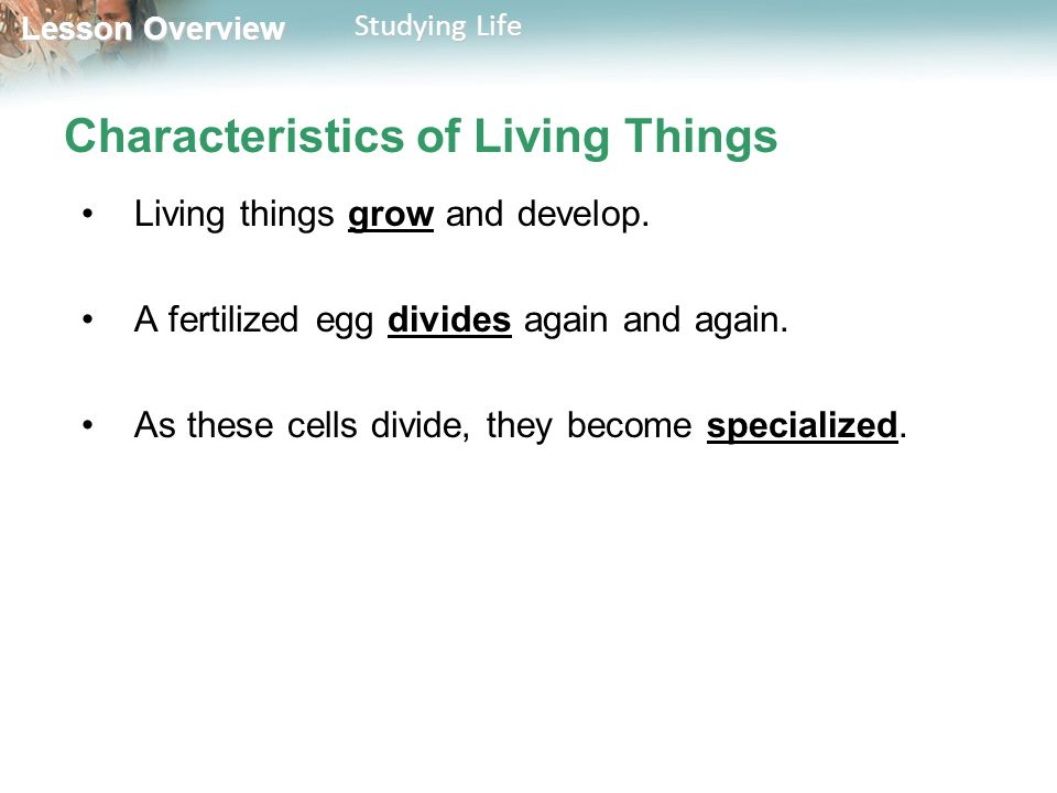 Lesson Overview Lesson Overview Studying Life Characteristics of Living Things Living things grow and develop.