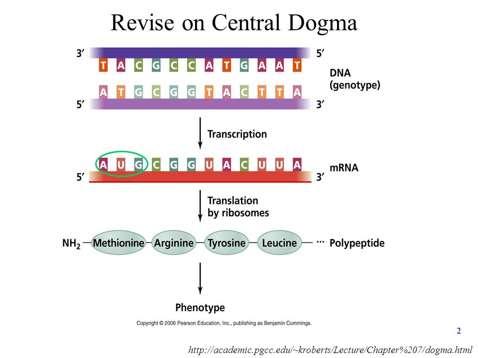 P2 Discussion 1 Revise On Central Dogma 2 Ppt Download