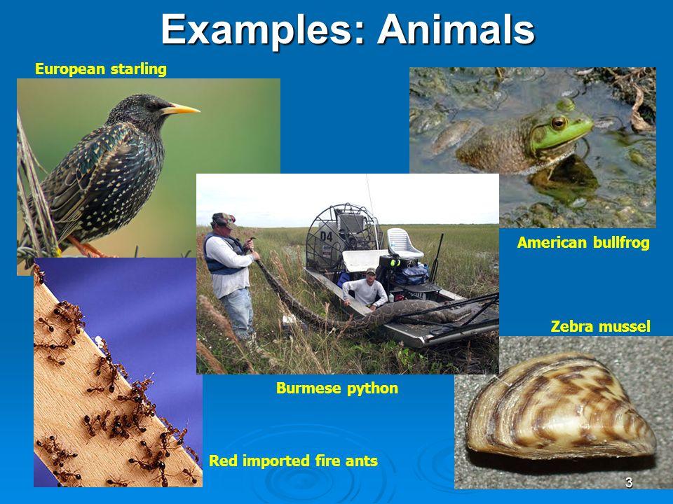 Invasive Species Chapter 4 Module 5 1 Invasive Species What Are