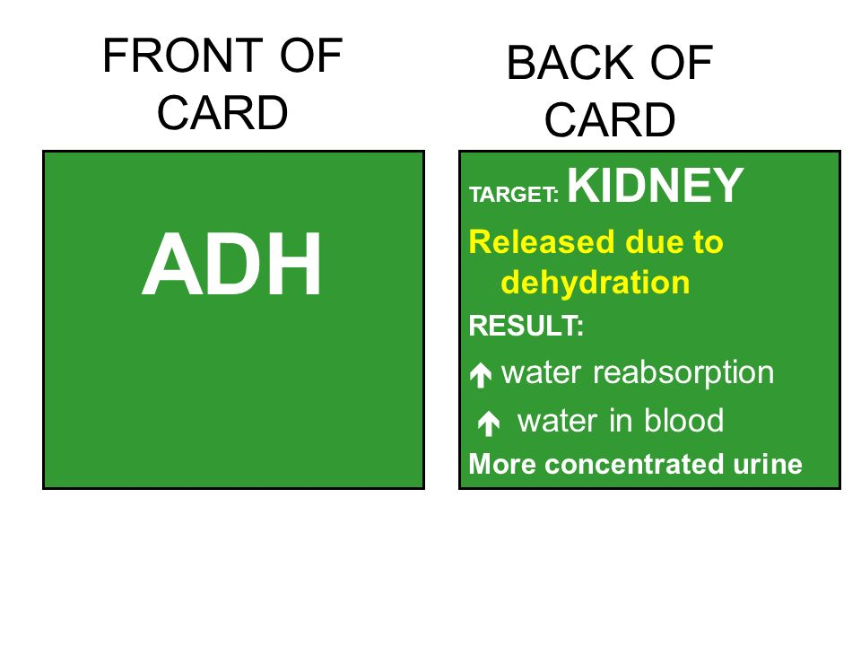 FRONT OF CARD ADH TARGET: KIDNEY Released due to dehydration RESULT:  water reabsorption  water in blood More concentrated urine BACK OF CARD