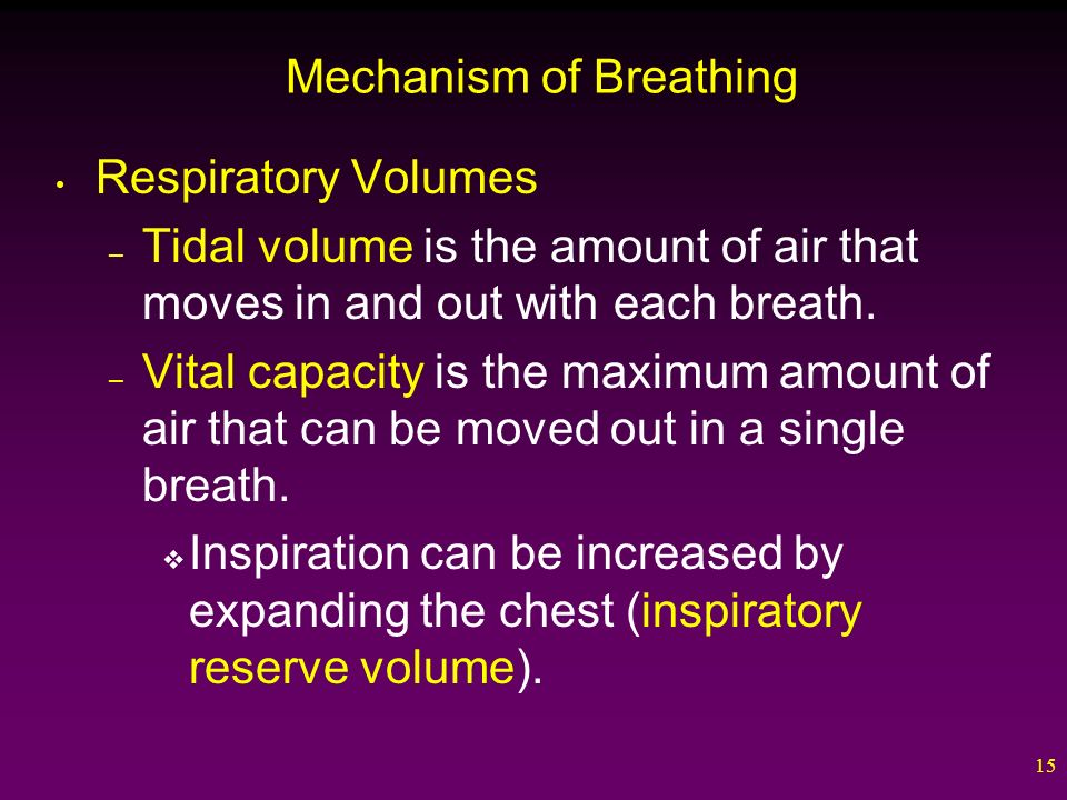 15 Mechanism of Breathing Respiratory Volumes – Tidal volume is the amount of air that moves in and out with each breath.