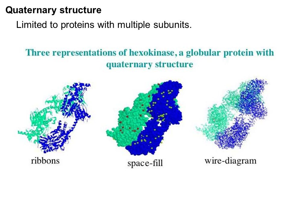 slide_19 protein ribbon diagram to wiring diagram ribbon model protein  at creativeand.co