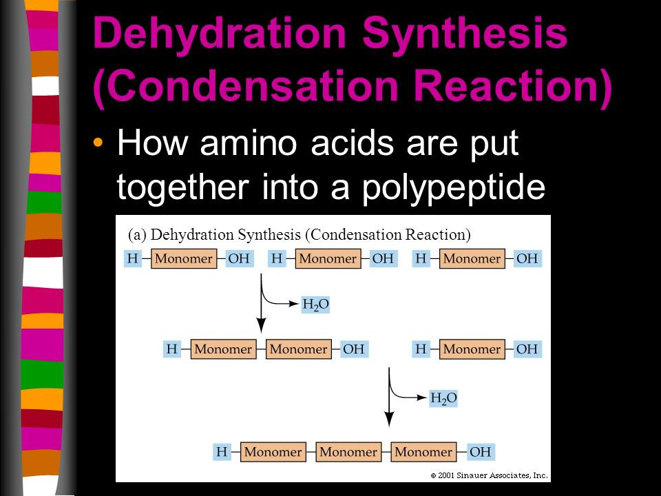 Dehydration Synthesis (Condensation Reaction) How amino acids are put together into a polypeptide (a) Dehydration Synthesis (Condensation Reaction)
