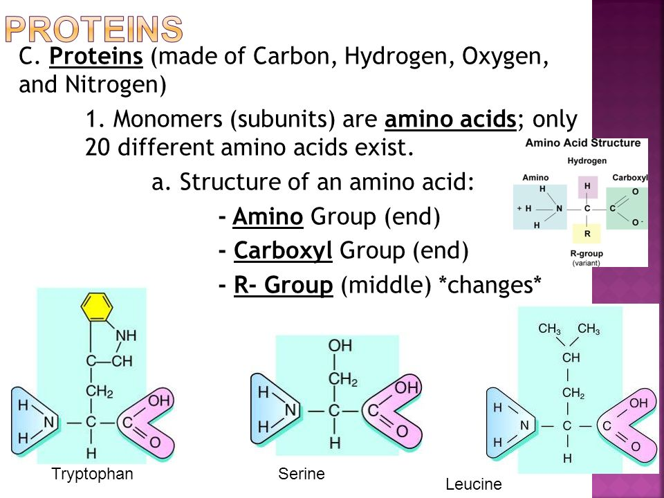 C. Proteins (made of Carbon, Hydrogen, Oxygen, and Nitrogen) 1.
