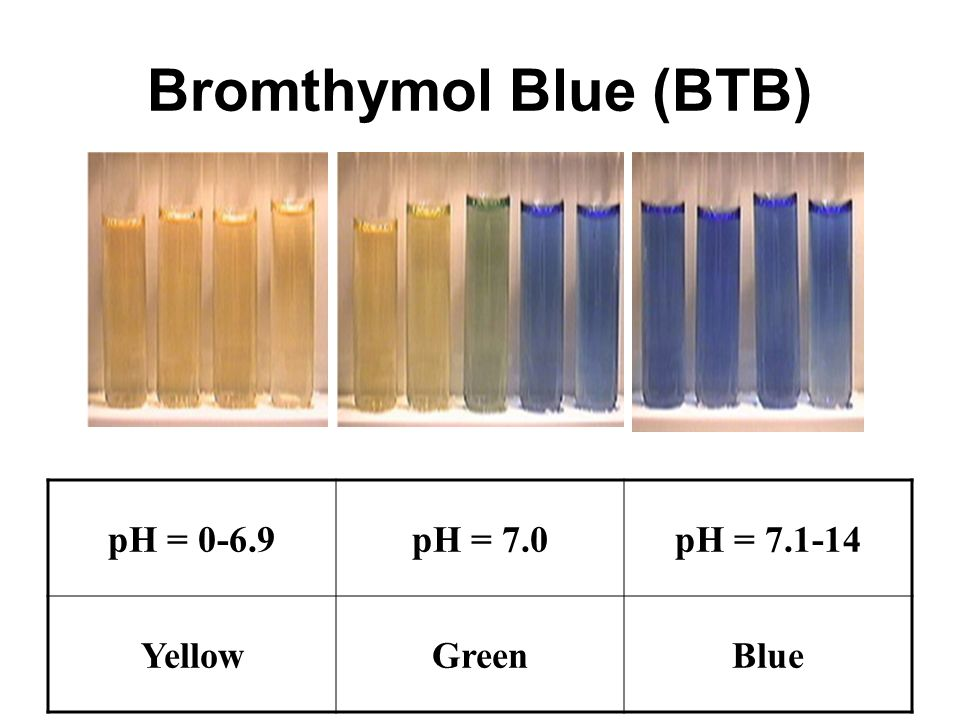 Bromothymol Blue Color Chart Frodofullring