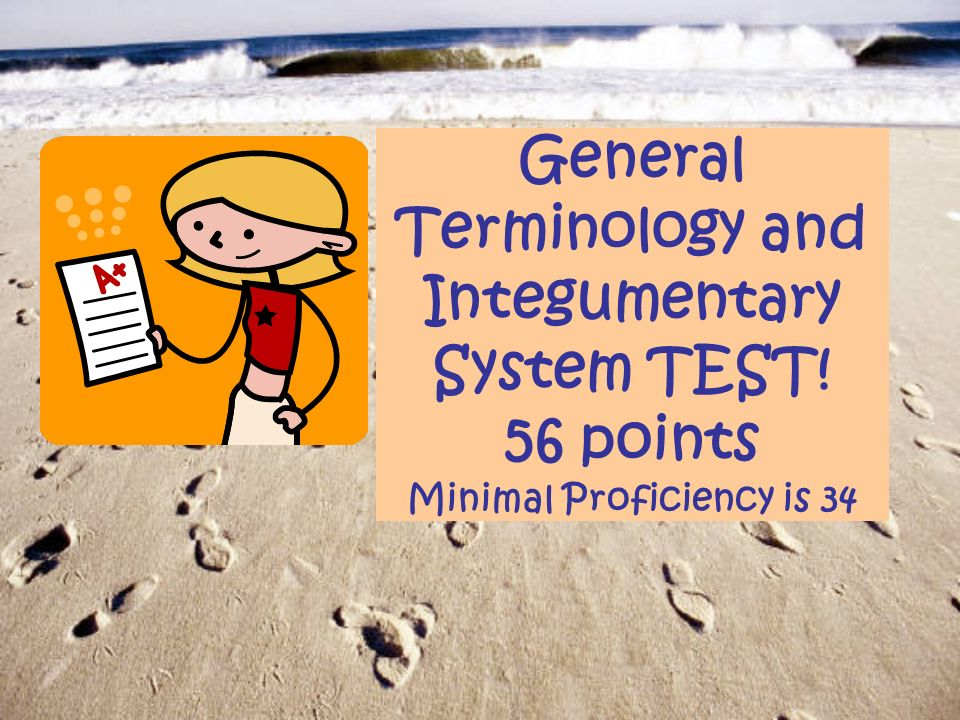 General Terminology and Integumentary System TEST! 56 points Minimal ...