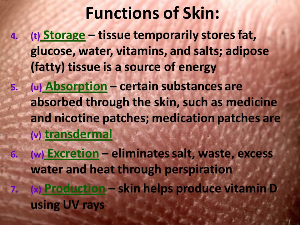 Functions of Skin: 4.(t) Storage – tissue temporarily stores fat, glucose, water, vitamins, and salts; adipose (fatty) tissue is a source of energy 5.(u) Absorption – certain substances are absorbed through the skin, such as medicine and nicotine patches; medication patches are (v) transdermal 6.(w) Excretion – eliminates salt, waste, excess water and heat through perspiration 7.(x) Production – skin helps produce vitamin D using UV rays