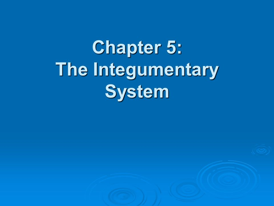 Study guide ch 5 integumentary system Essay Academic Writing Service ...