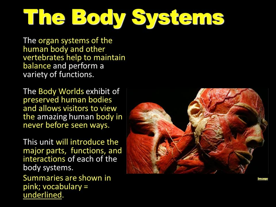 organ systems of the human body List of organs of the human body this article contains a list of organs of the human body it is widely believed that there are 79 organs however, there is no universally standard definition of what constitutes an organ, and some tissue groups' status as one is debated.