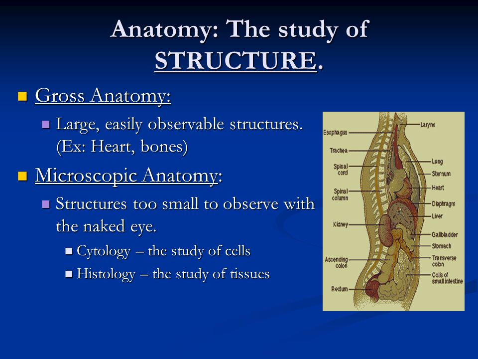 Anatomy and Physiology Objectives: 1. Describe the branches of ...