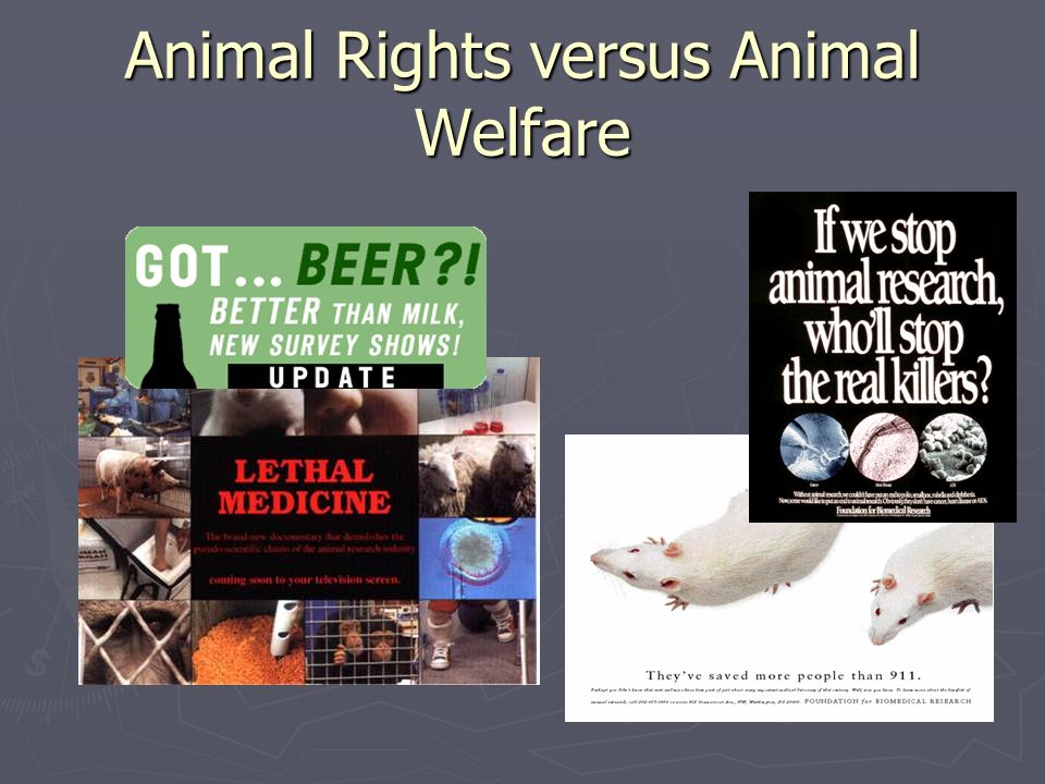 should animals rights be protected in the us The united states congress lacks the ability within the individuals have a right not to be protected by animals, and comatose adults to have rights.