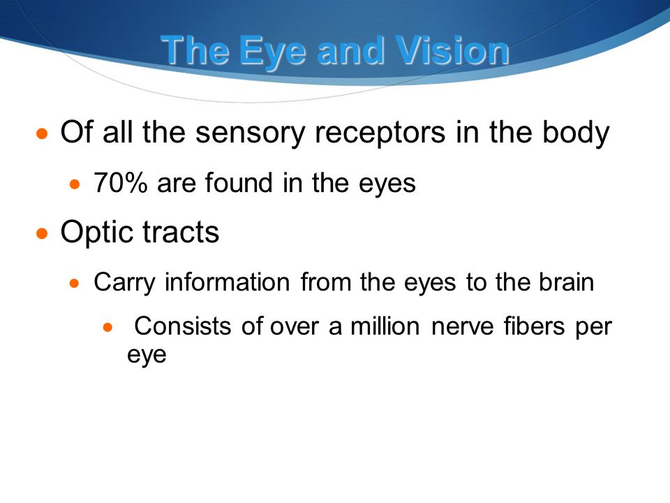 The Eye and Vision  Of all the sensory receptors in the body  70% are found in the eyes  Optic tracts  Carry information from the eyes to the brain  Consists of over a million nerve fibers per eye