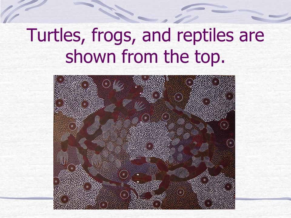 Turtles, frogs, and reptiles are shown from the top.