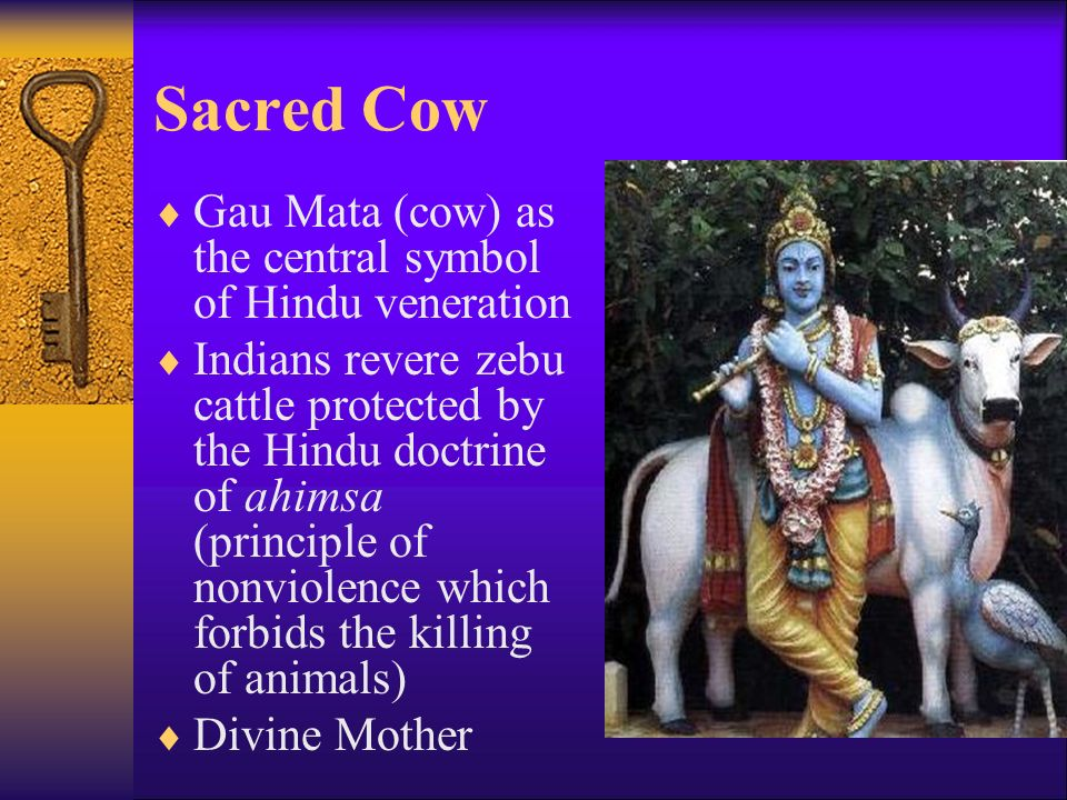 Sacred Cow  Gau Mata (cow) as the central symbol of Hindu veneration  Indians revere zebu cattle protected by the Hindu doctrine of ahimsa (principle of nonviolence which forbids the killing of animals)  Divine Mother