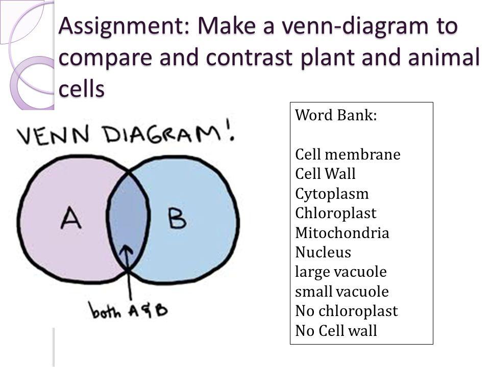 Chloroplast and mitochondria venn diagram vatozozdevelopment chloroplast ccuart Images