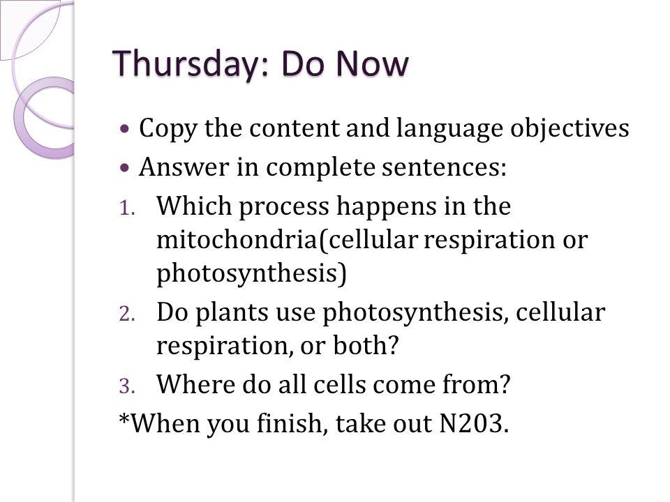 cellular respiration worksheet answer key Termolak – Cell Respiration Worksheet