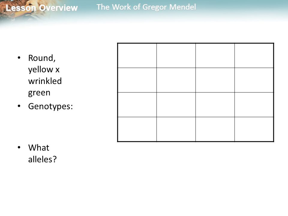 Lesson Overview Lesson Overview The Work of Gregor Mendel Round, yellow x wrinkled green Genotypes: What alleles