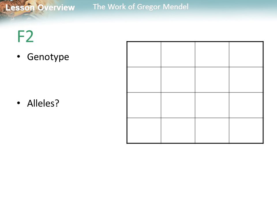 Lesson Overview Lesson Overview The Work of Gregor Mendel F2 Genotype Alleles