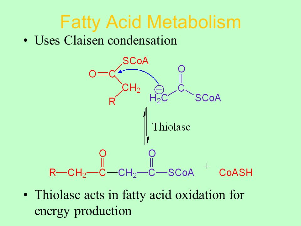 Fatty Acid Metabolism Uses Claisen condensation Thiolase acts in fatty acid oxidation for energy production