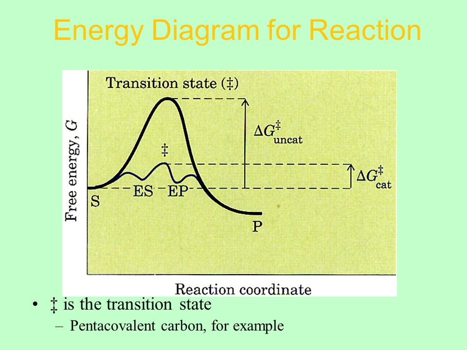 Energy Diagram for Reaction ‡ is the transition state –Pentacovalent carbon, for example