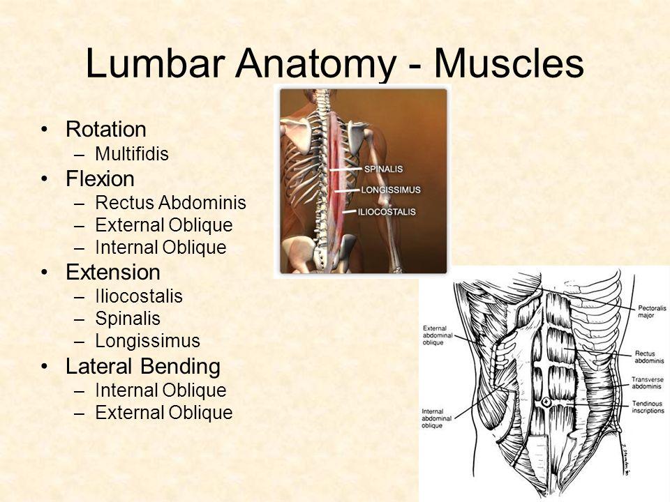 Lumbar back muscles anatomy