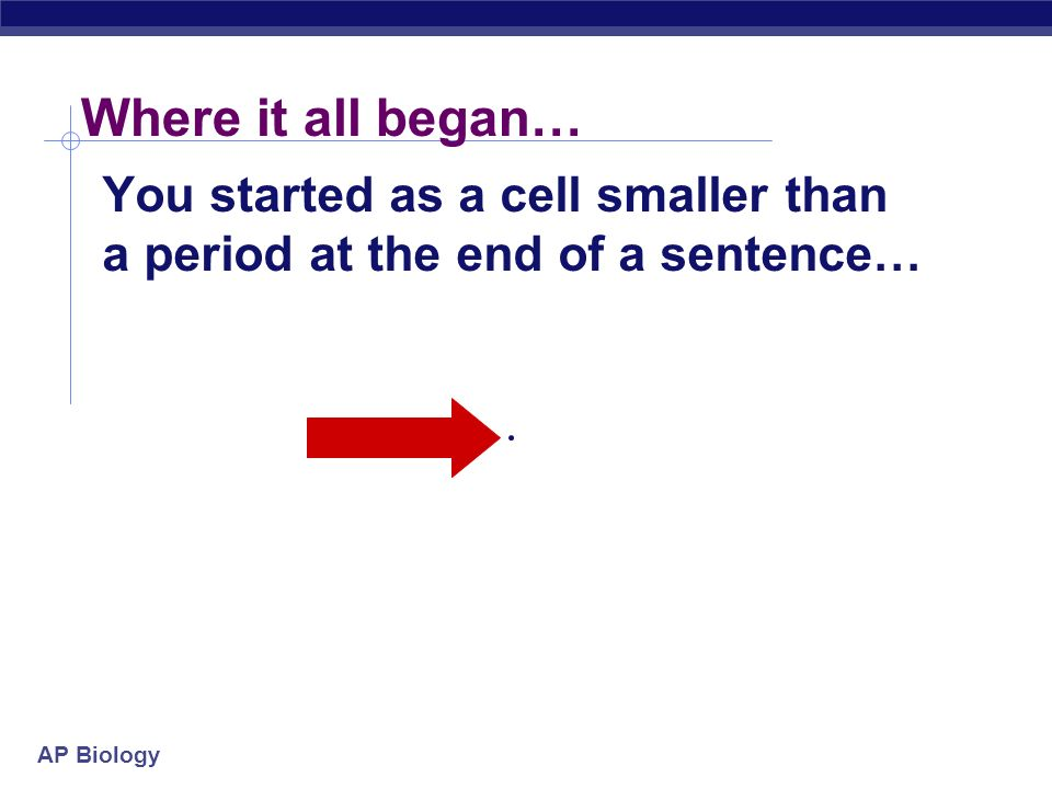 cell division essay Biology essay as we all know, an organism is made up of about a hundred trillion cells all these cells are actually come from a single cell therefore, cell division is crucial for the growth and reproduction of organisms.