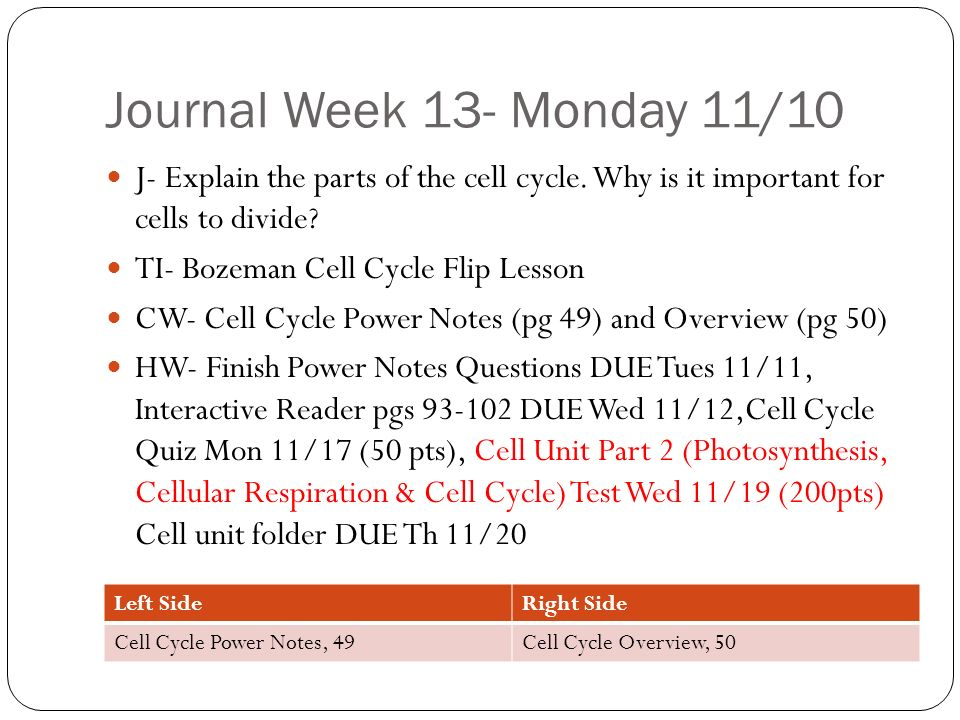 math worksheet : miss hanna biology the cell cycle growth  division of body cells  : Cell Growth And Division Worksheet