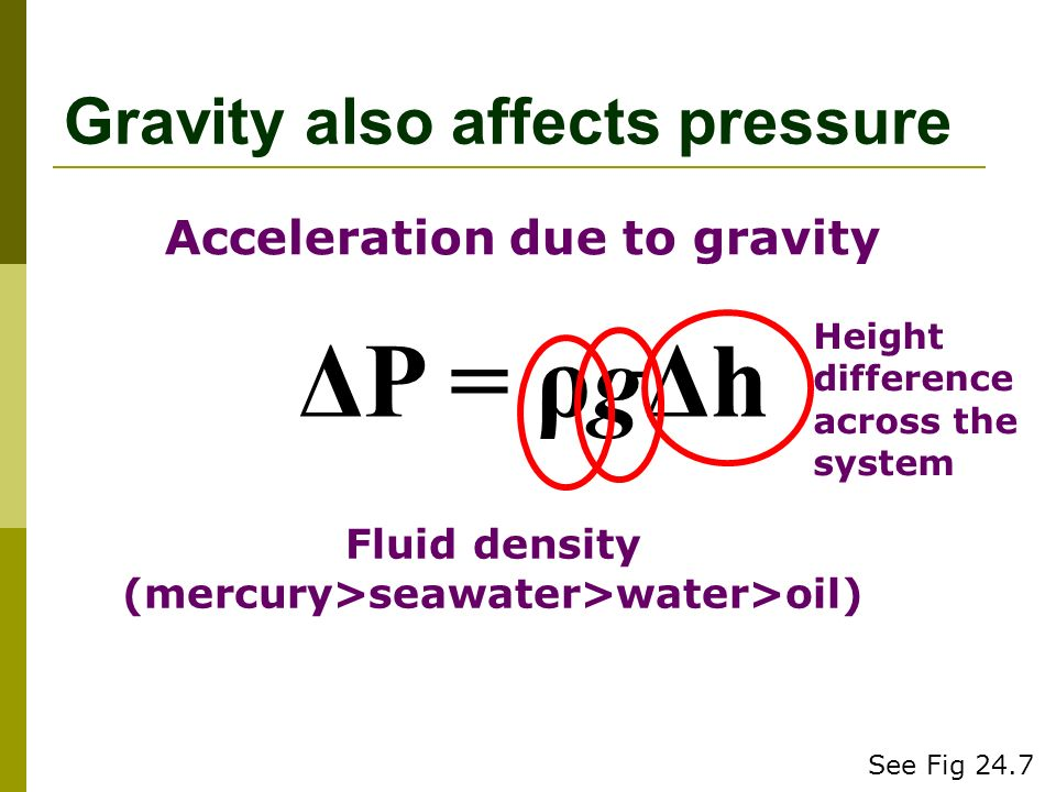 Gravity also affects pressure ΔP = ρgΔh Fluid density (mercury>seawater>water>oil) Acceleration due to gravity Height difference across the system See Fig 24.7