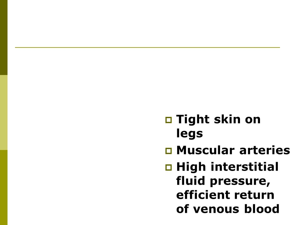  Tight skin on legs  Muscular arteries  High interstitial fluid pressure, efficient return of venous blood
