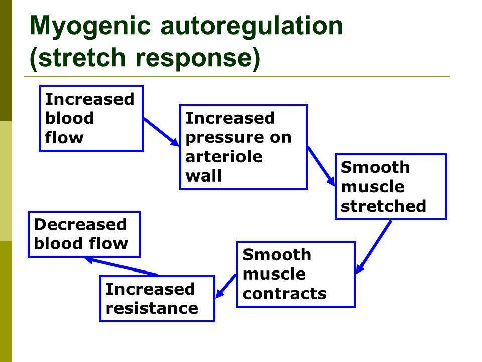 Myogenic autoregulation (stretch response) Increased blood flow Increased pressure on arteriole wall Smooth muscle stretched Smooth muscle contracts Increased resistance Decreased blood flow