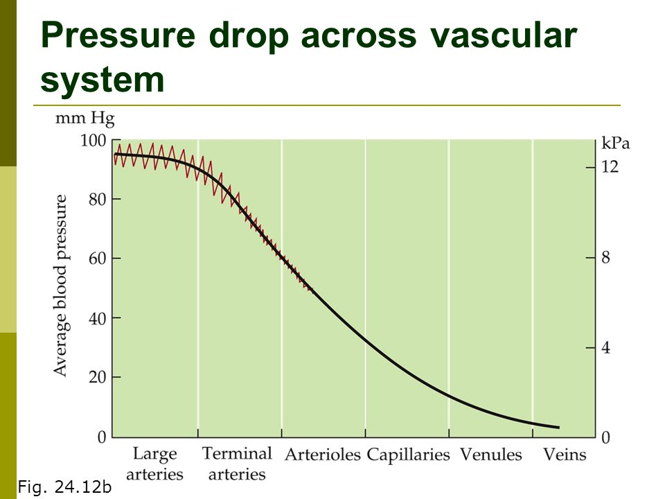 Pressure drop across vascular system Fig b