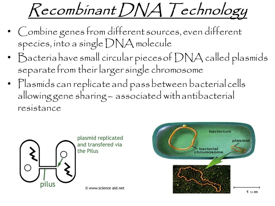Recombinant DNA Technology Combine genes from different sources, even different species, into a single DNA molecule Bacteria have small circular pieces of DNA called plasmids separate from their larger single chromosome Plasmids can replicate and pass between bacterial cells allowing gene sharing – associated with antibacterial resistance