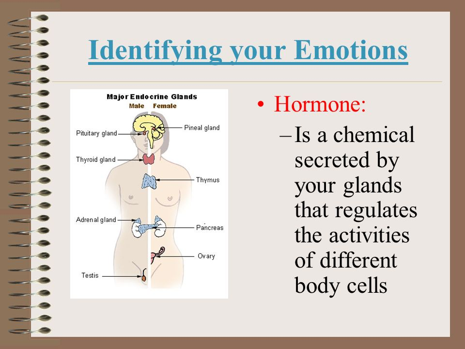Identifying your Emotions Hormone: –Is a chemical secreted by your glands that regulates the activities of different body cells