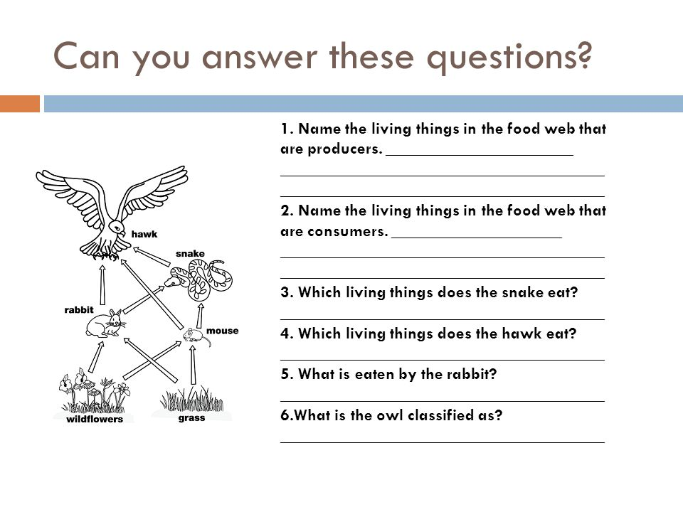 Can you answer these questions. 1. Name the living things in the food web that are producers.
