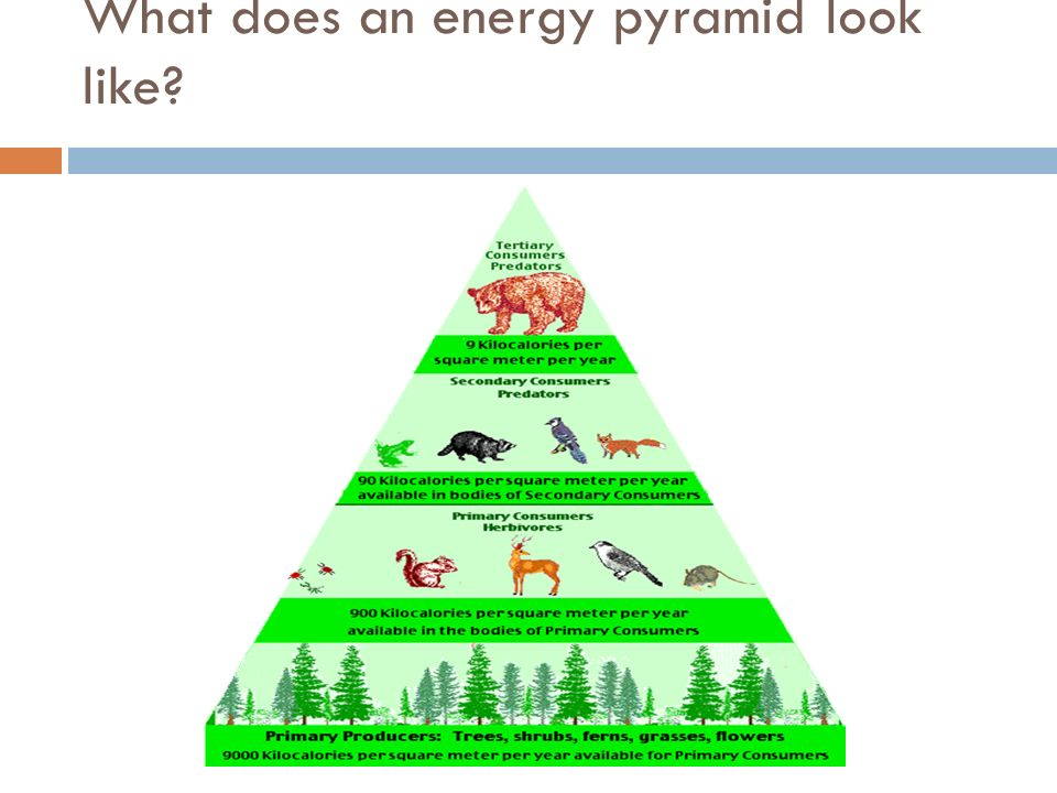 What does an energy pyramid look like