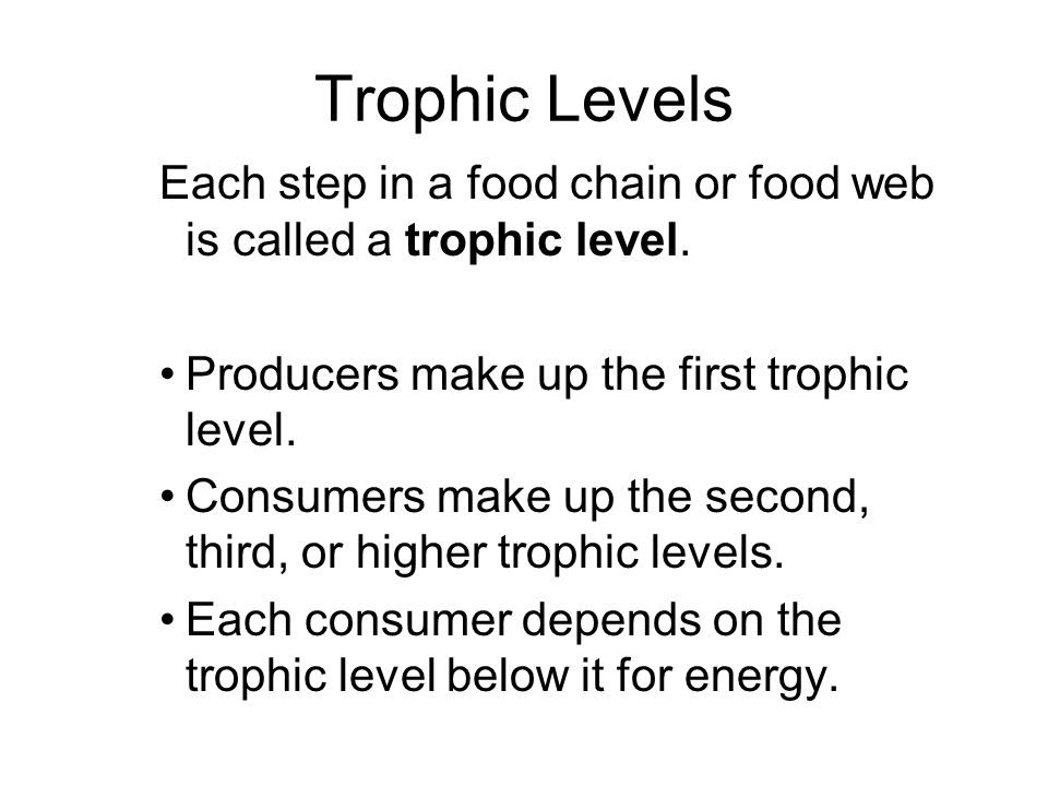 Trophic Levels Each step in a food chain or food web is called a trophic level.