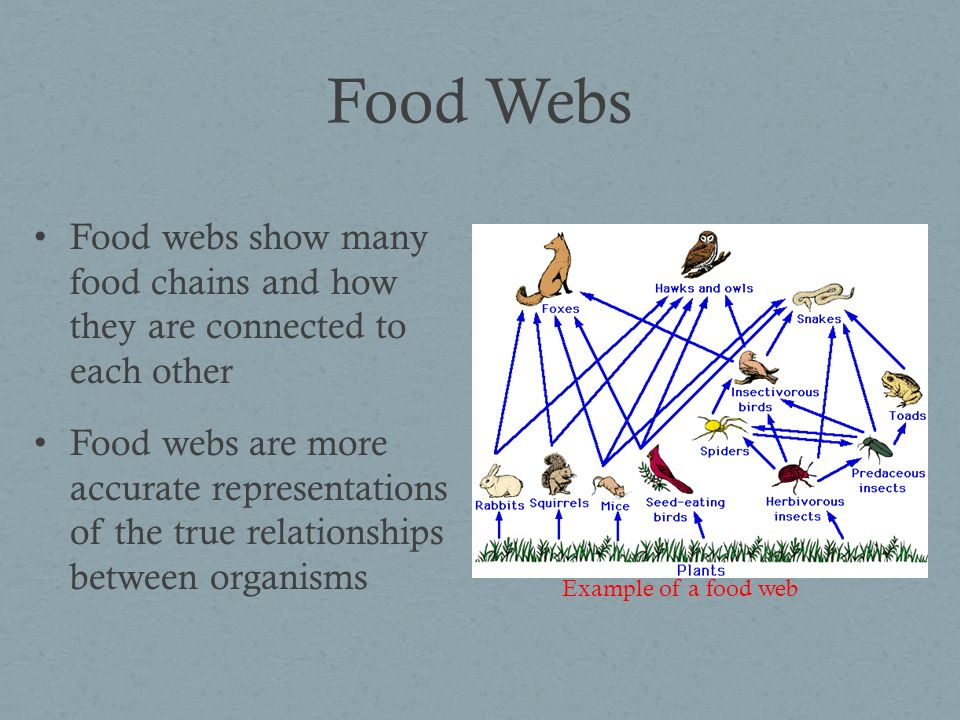 Food Chains and Webs Show the path of energy through an ecosystem Arrows follow the direction of energy flow All food chains and webs have producers at the base