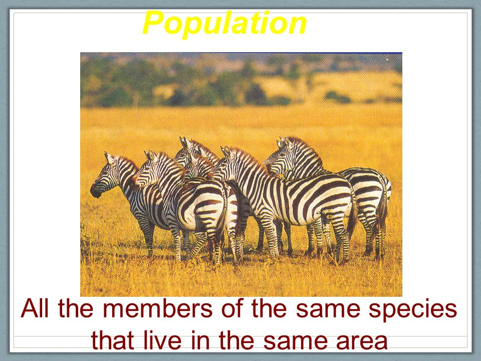 Organization of the Living World Biosphere Ecosystem Community Population Individual Smallest to Largest