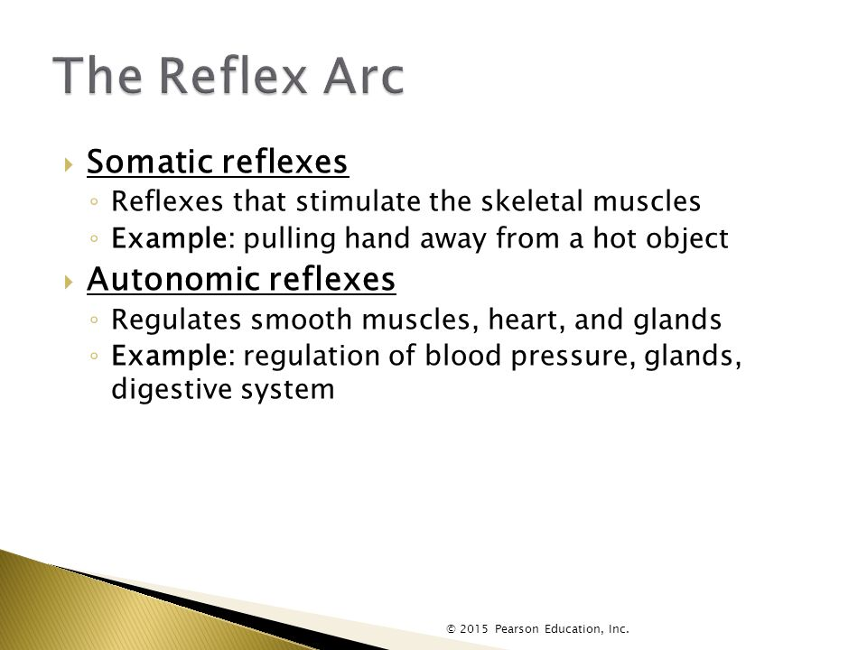  Somatic reflexes ◦ Reflexes that stimulate the skeletal muscles ◦ Example: pulling hand away from a hot object  Autonomic reflexes ◦ Regulates smooth muscles, heart, and glands ◦ Example: regulation of blood pressure, glands, digestive system © 2015 Pearson Education, Inc.