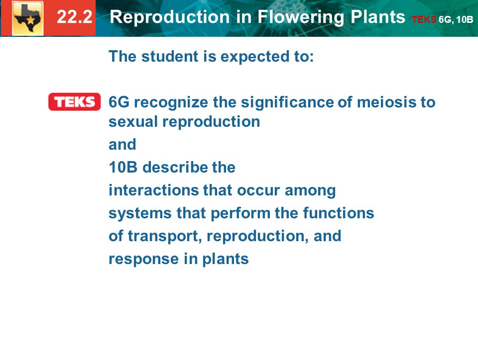 22.2 Reproduction in Flowering Plants TEKS 6G, 10B The student is expected to: 6G recognize the significance of meiosis to sexual reproduction and 10B describe the interactions that occur among systems that perform the functions of transport, reproduction, and response in plants