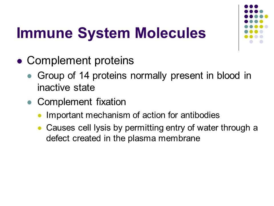 Immune System Molecules Complement proteins Group of 14 proteins normally present in blood in inactive state Complement fixation Important mechanism of action for antibodies Causes cell lysis by permitting entry of water through a defect created in the plasma membrane