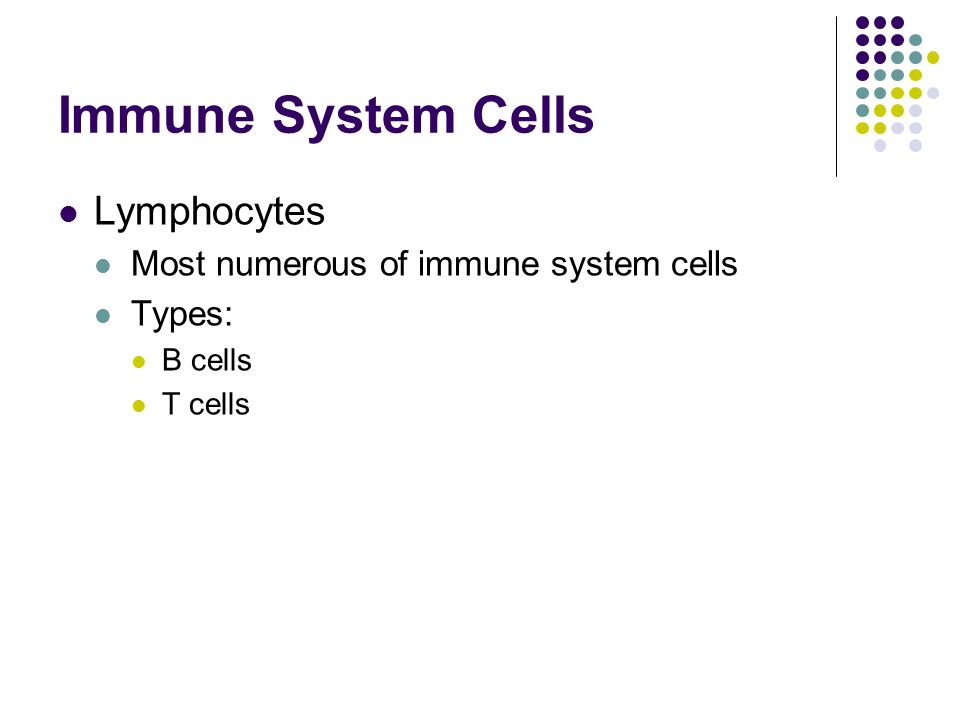 Immune System Cells Lymphocytes Most numerous of immune system cells Types: B cells T cells