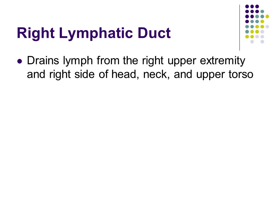 Right Lymphatic Duct Drains lymph from the right upper extremity and right side of head, neck, and upper torso