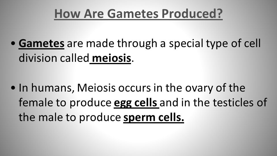 How Are Gametes Produced. Gametes are made through a special type of cell division called meiosis.