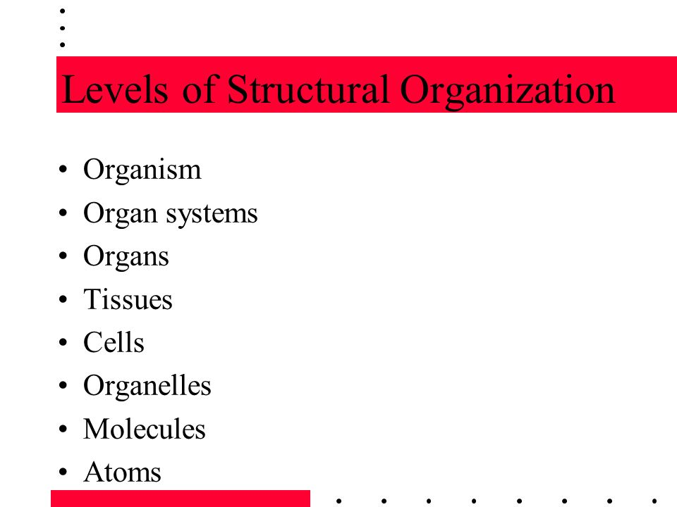BIOLOGY 145 ANATOMY & PHYSIOLOGY CHAPTER 1. Introduction to the ...