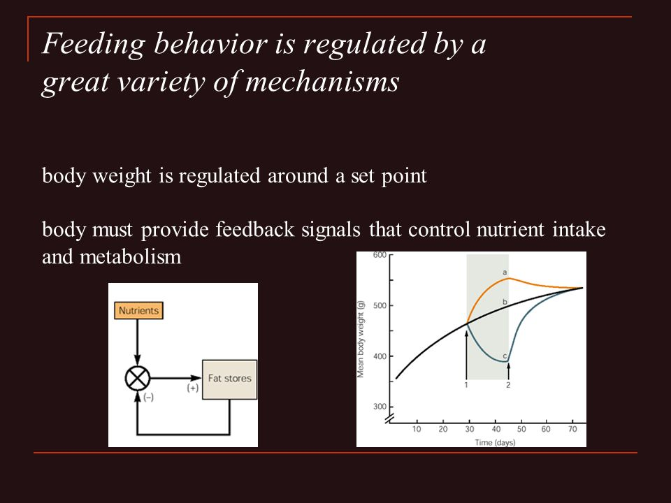 Feeding behavior is regulated by a great variety of mechanisms body weight is regulated around a set point body must provide feedback signals that control nutrient intake and metabolism
