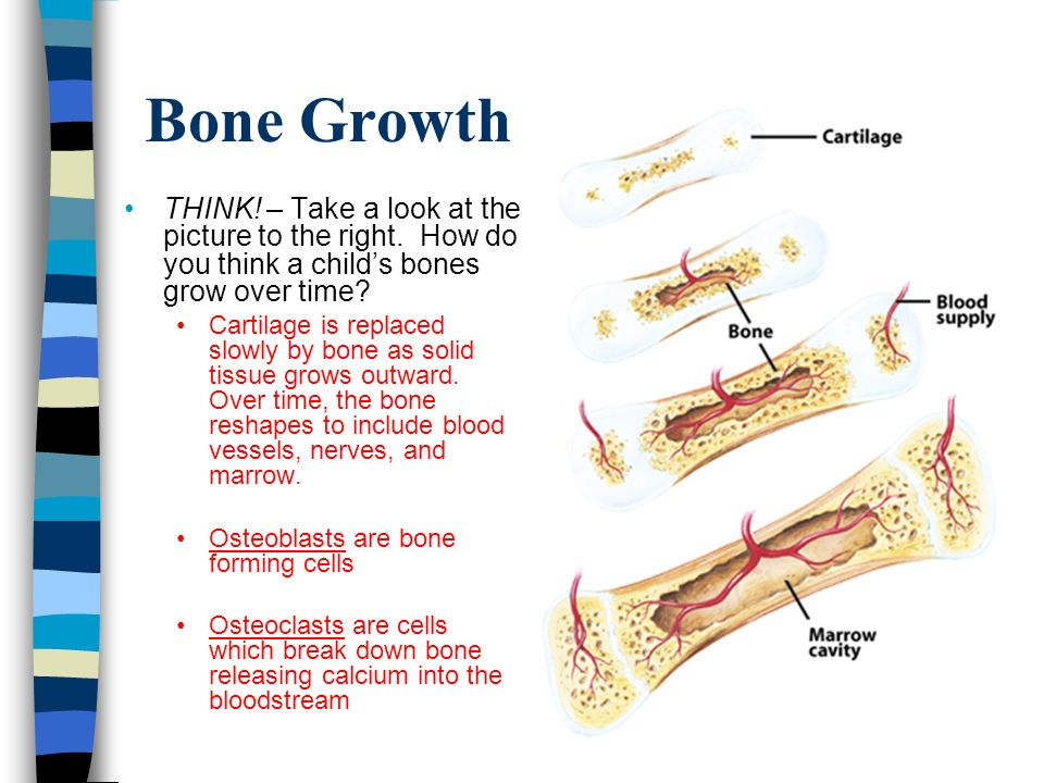 Bone Growth THINK. – Take a look at the picture to the right.
